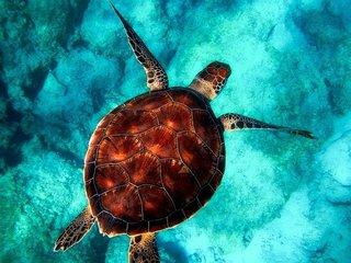 水に浮かぶ海亀.jpg