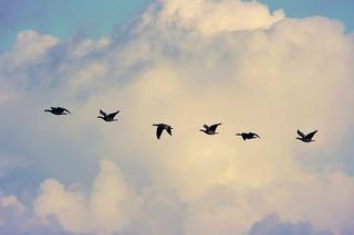 渡り鳥.jpg
